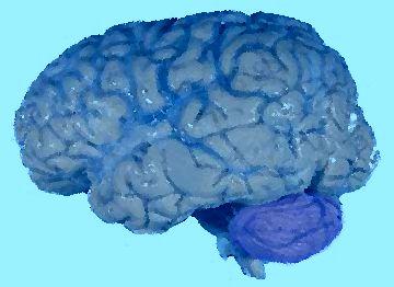 Диагностика и мониторинг лечения онкозаболеваний головного мозга человека
