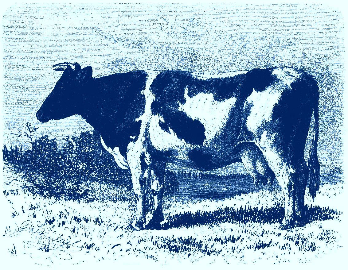 Диагностика вирусного лейкоза крупного рогатого скота