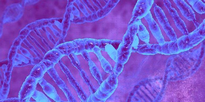 Изучение ДНК с помощью биосенсора ПЛАЗМОН-6